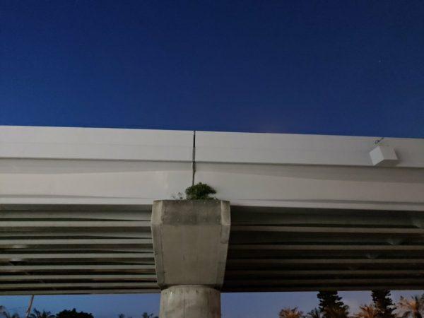 上部道路の支柱に根を生やす木